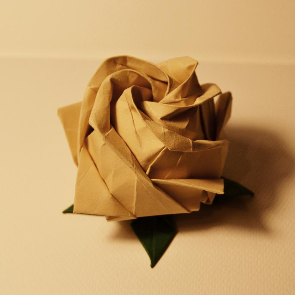 242- pentagonal rose