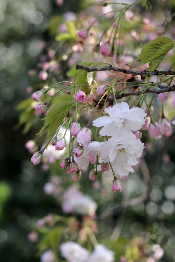 Beautiful flowers in Cambridge