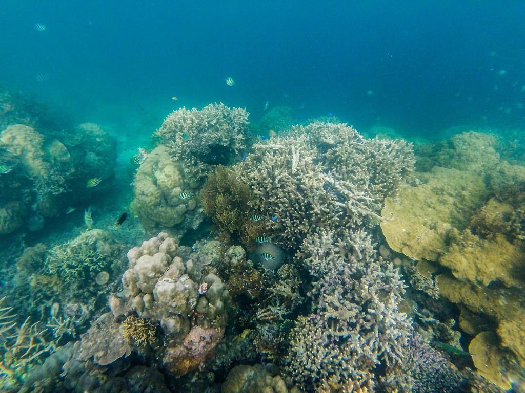Fantastic Reef Port Barton