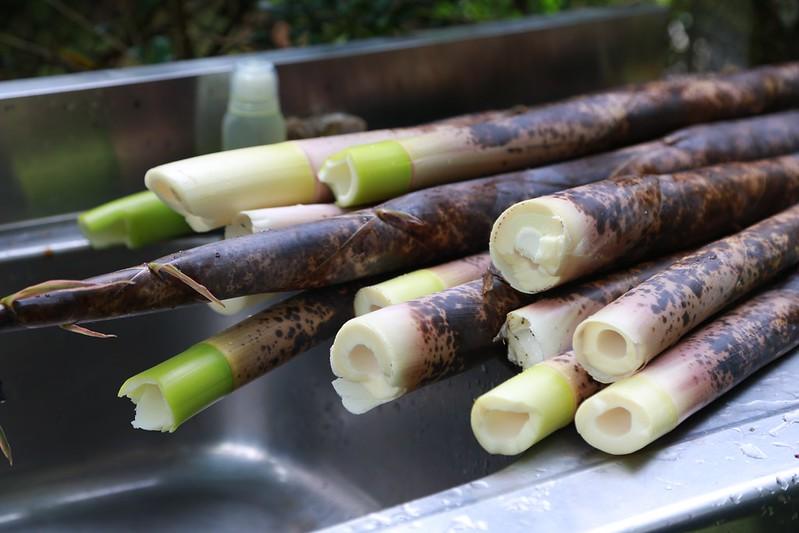 早上鮮採的桂竹筍
