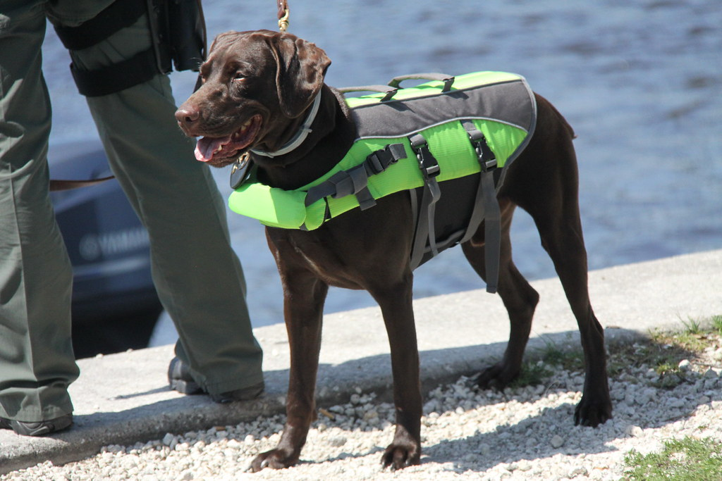 Life jackets for animals k 9 scooby in jacksonville for Florida fish and wildlife jobs