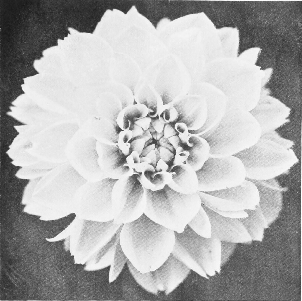 Image From Page 70 Of The Dahlia A Practical Treatise On Flickr