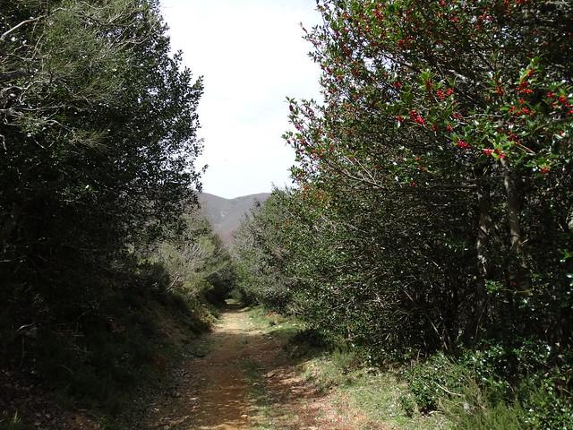 Camino en la Ruta del Albergue a Tres Bispos - Ancares