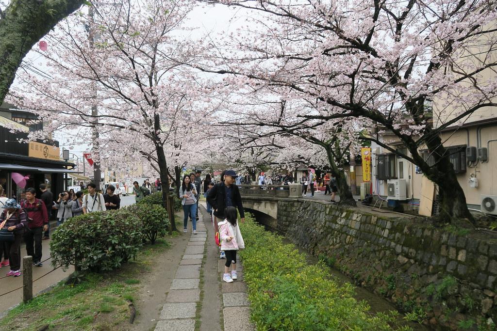 這種時期拍哲學之道的櫻花,一定沒有辦法避免遊客