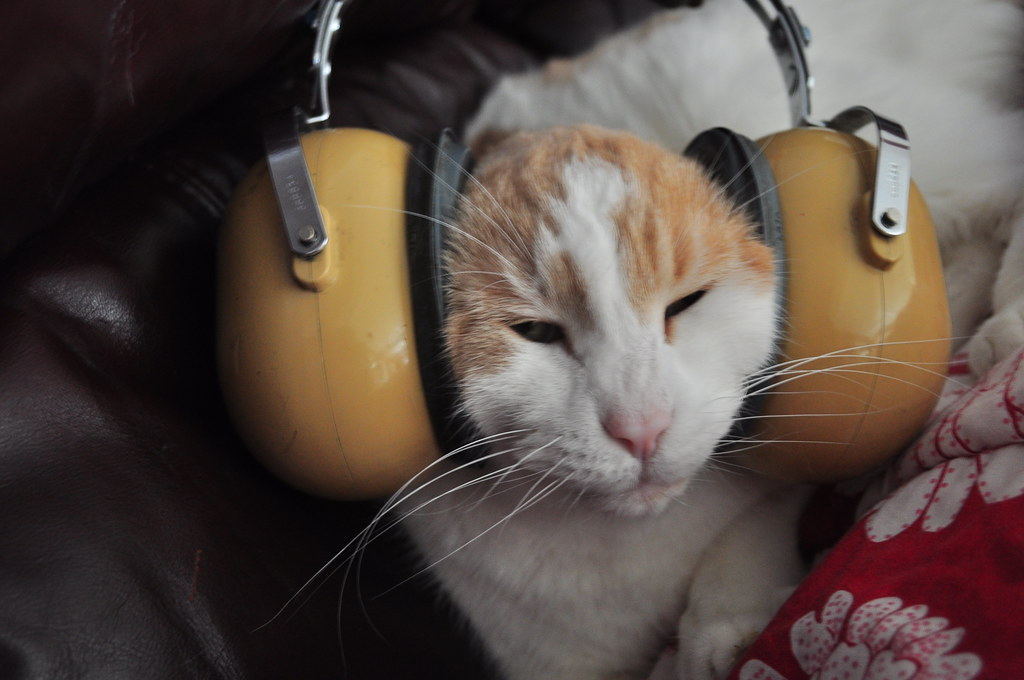 Can Cats Hear Music