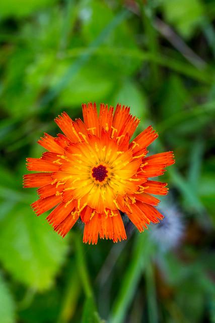 Logo Carr Ef Bf Bd Orange Avec Une Tasse A Caf Ef Bf Bd Sur Pc