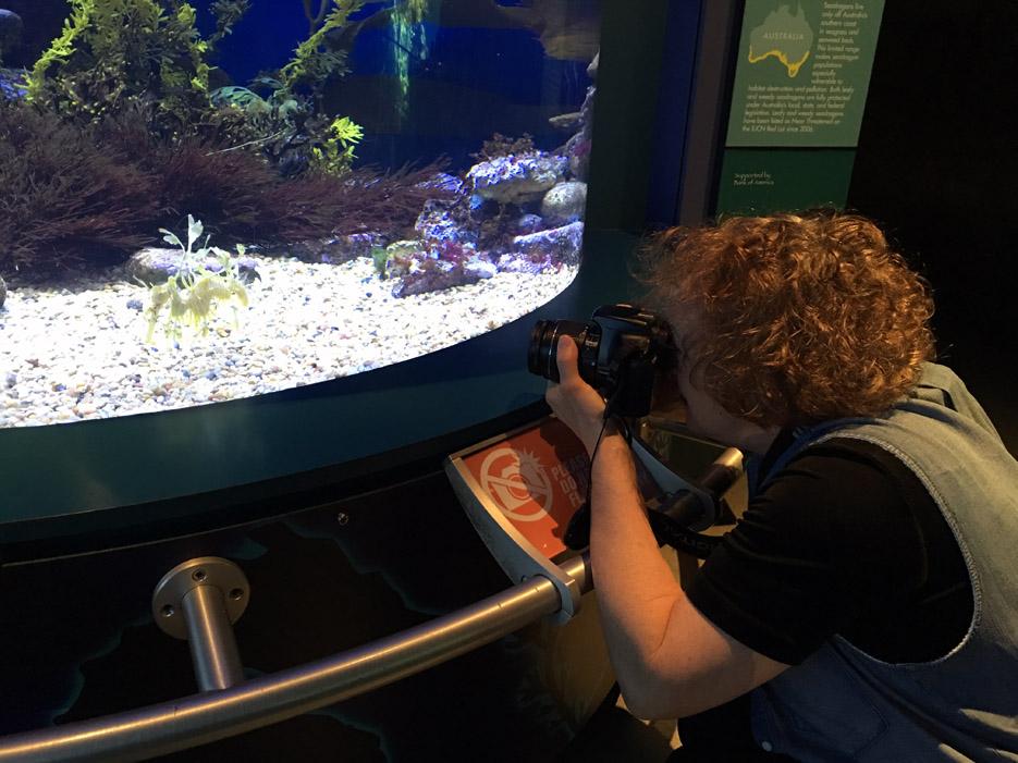 060516_aquarium36