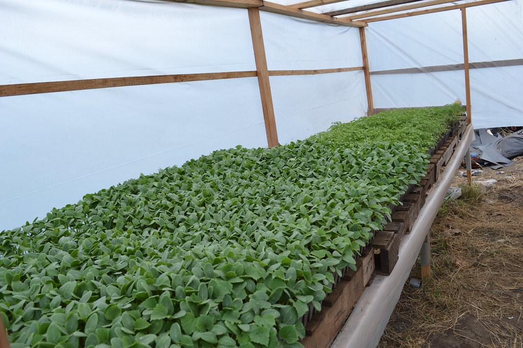 Whole Foods Plantation Jobs