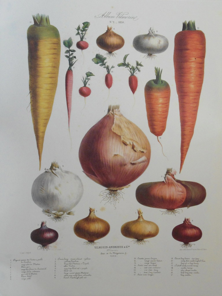 Root vegetables. Album...