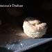 Buttermilk Biscuits: Sunlight