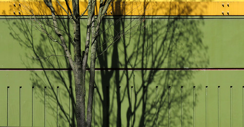 Leafless tree casting shadows on a green wall in Portland, Oregon