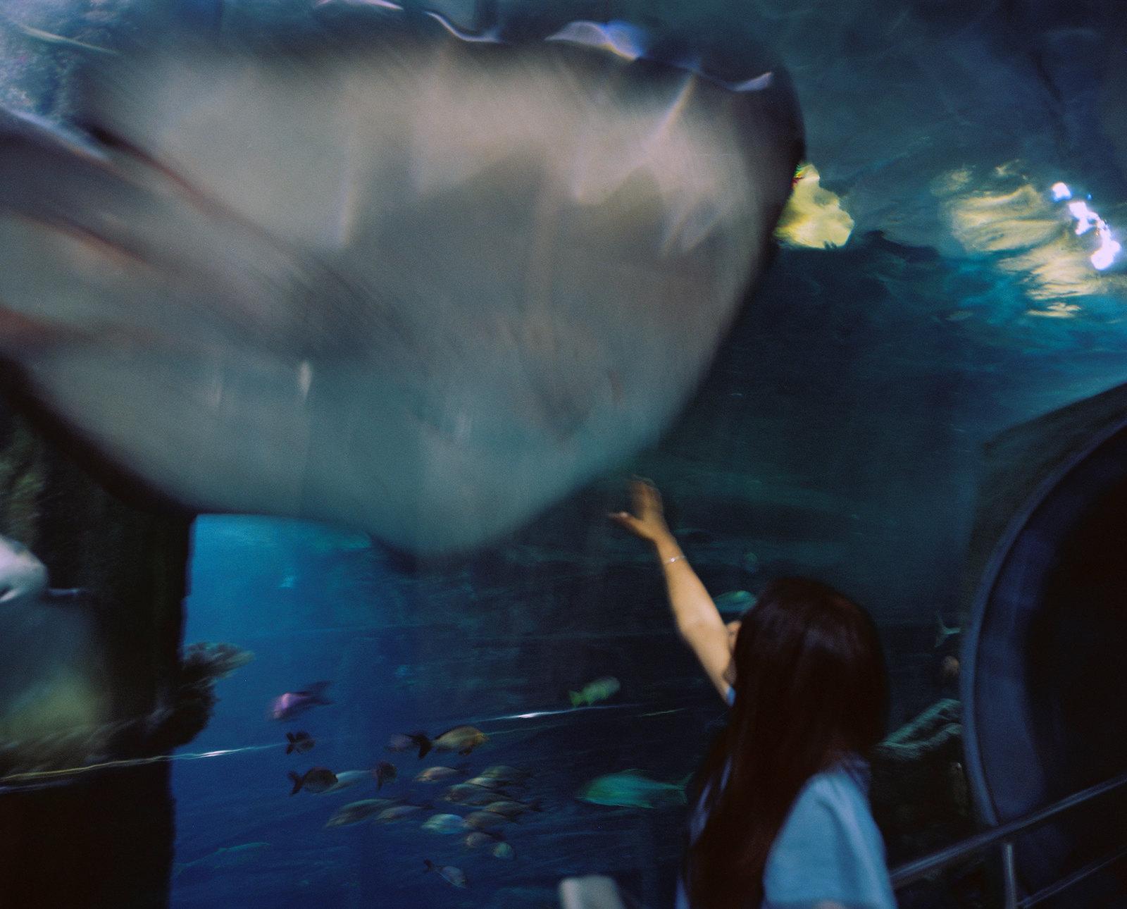 Melbourne Aquarium iii