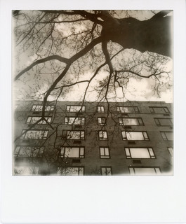 BW BROOKLYN TREE | by Lindsey Garrett