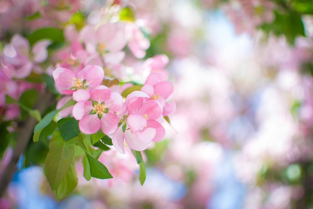 Fleur De Ville Kristina Servant Flickr