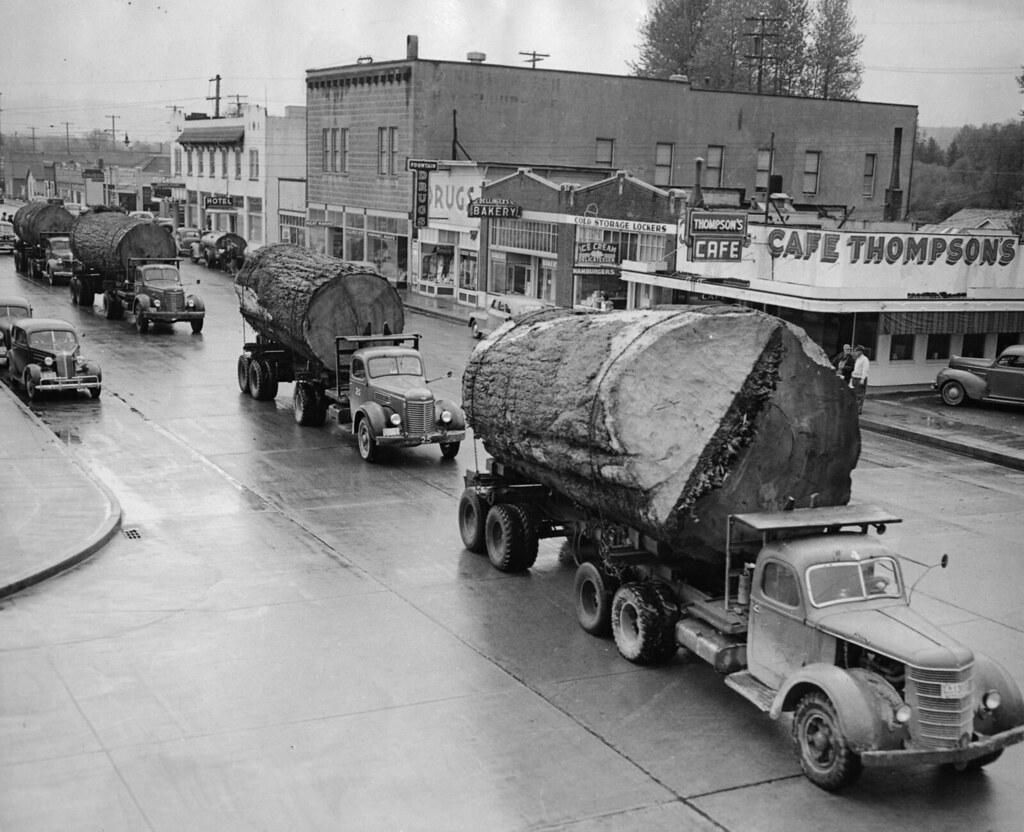 Log truck caravan. | Caption: A caravan of trucks carrying m… | Flickr