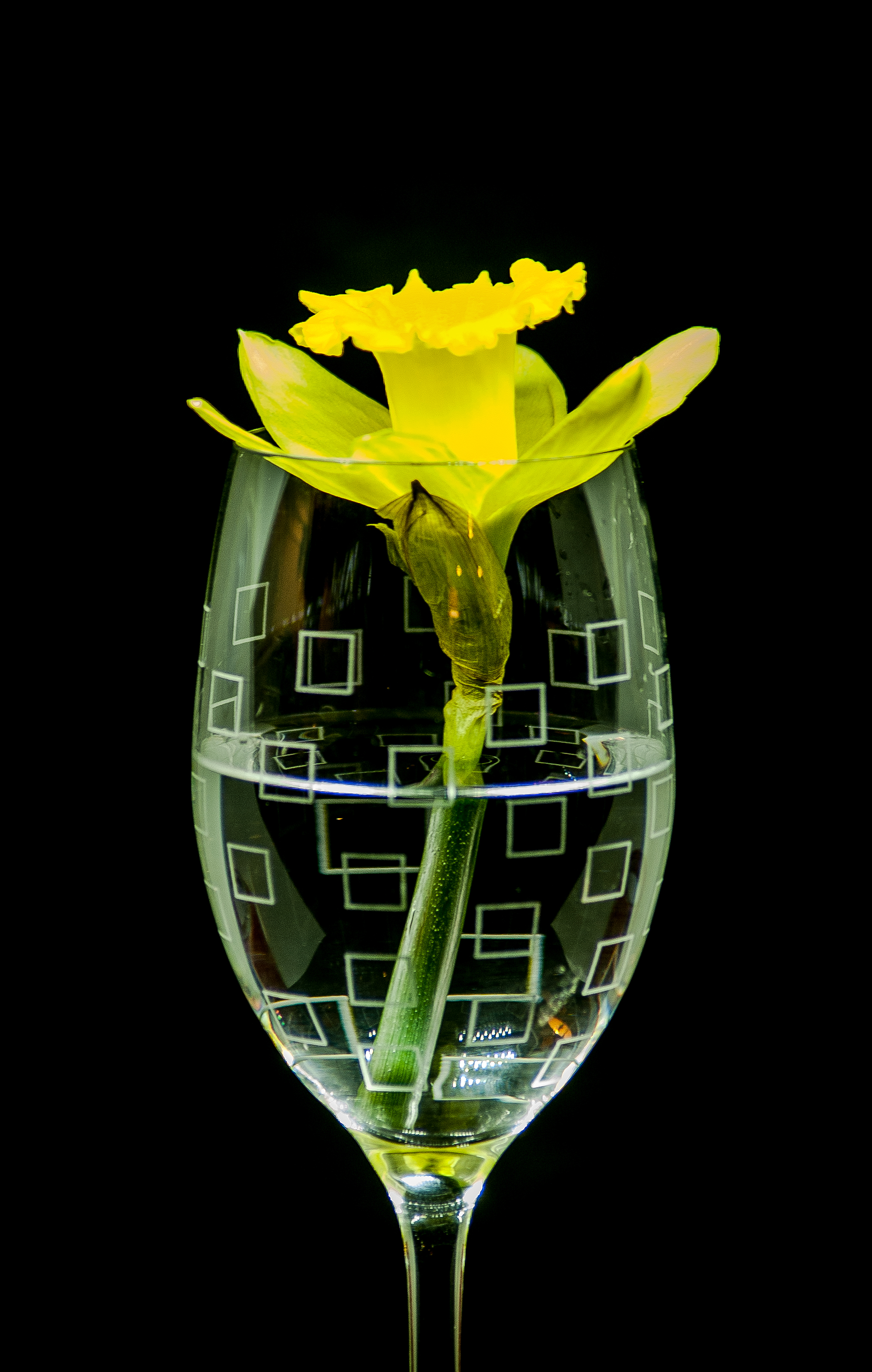 Daffodil in Wine Glass