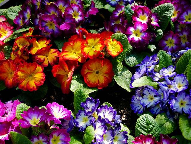 20170409-Pixelgrafie-Botanischer_Garten