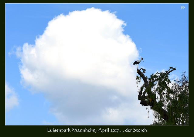 Luisenpark Mannheim, April 2017 ... Storch, Weißstorch, Storchenkolonie ... Fotos und Collagen: Brigitte Stolle, Mannheim