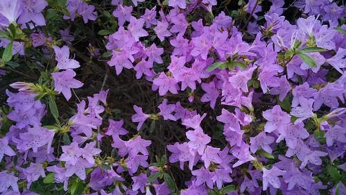 Pretty spring flowers.