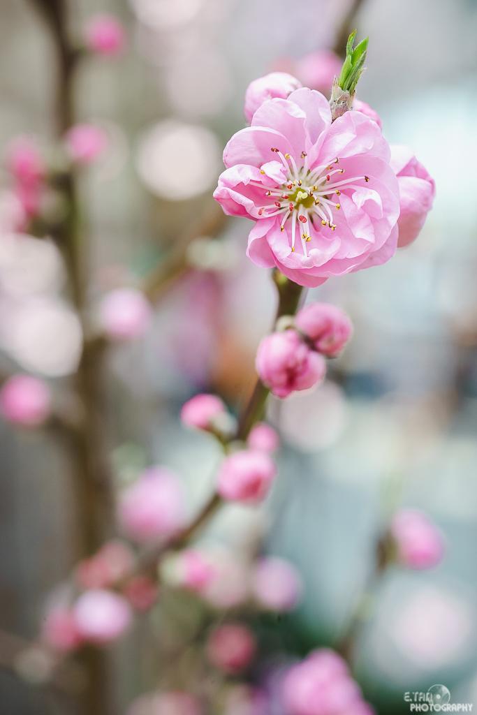 Blossom Bliss - 014