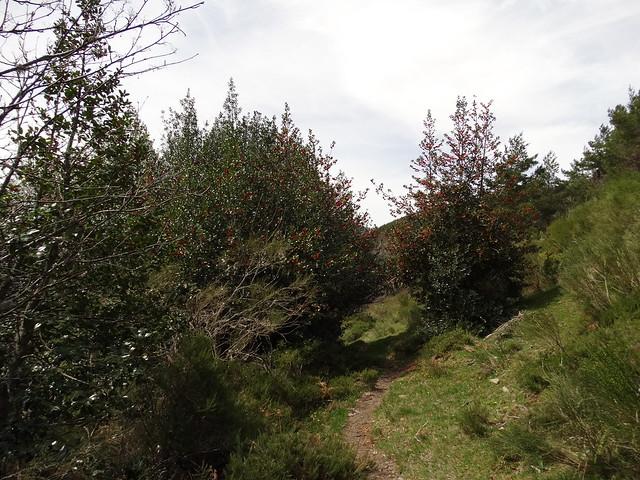 Sendero en la Ruta del Albergue a Tres Bispos - Ancares