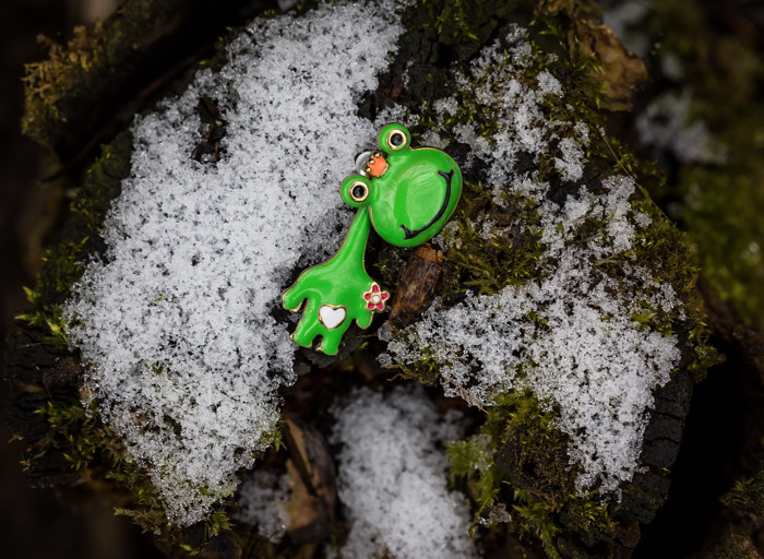 vihreä sammakko lumi