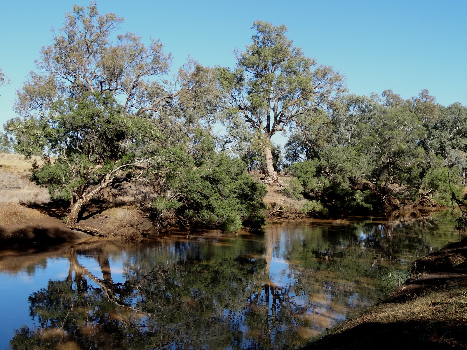 Peaceful spot on the Warrego River in central Charleville.