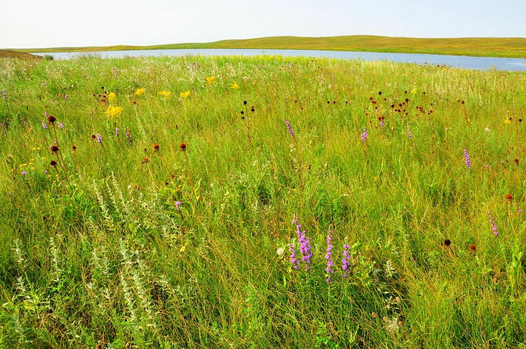 native mixed grass prairie sand lake wetland management di u2026