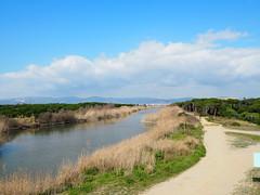 La Riera de Sant Climent (esquerra) i la Pineda de Cal Francès (dreta) per Teresa Grau Ros a Flickr