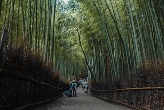 arashiyama 39 (1 of 1)
