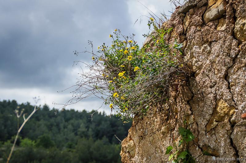 Flores en lo alto de una pared de una casa de Marmellar