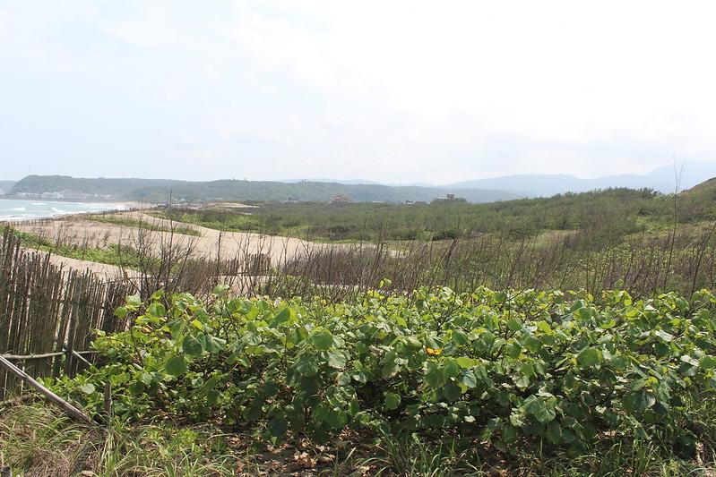 海岸林位處臺灣最北端,冬季受東北季風直接吹襲,夏秋兩季則常有颱風侵襲,平日更受強風、飛砂、海潮及鹽霧等危害,建造與維持實屬不易。攝影:廖靜蕙