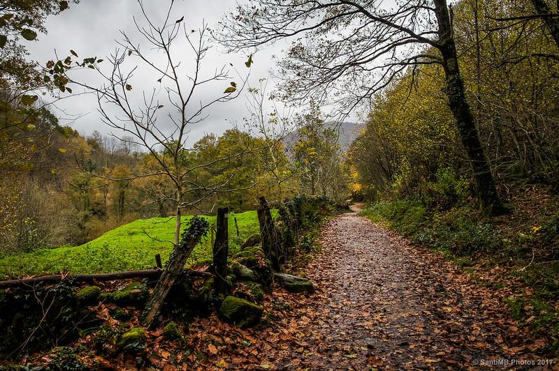 El sendero de la Cascada de Xoxrroxin desde la entrada al bosque