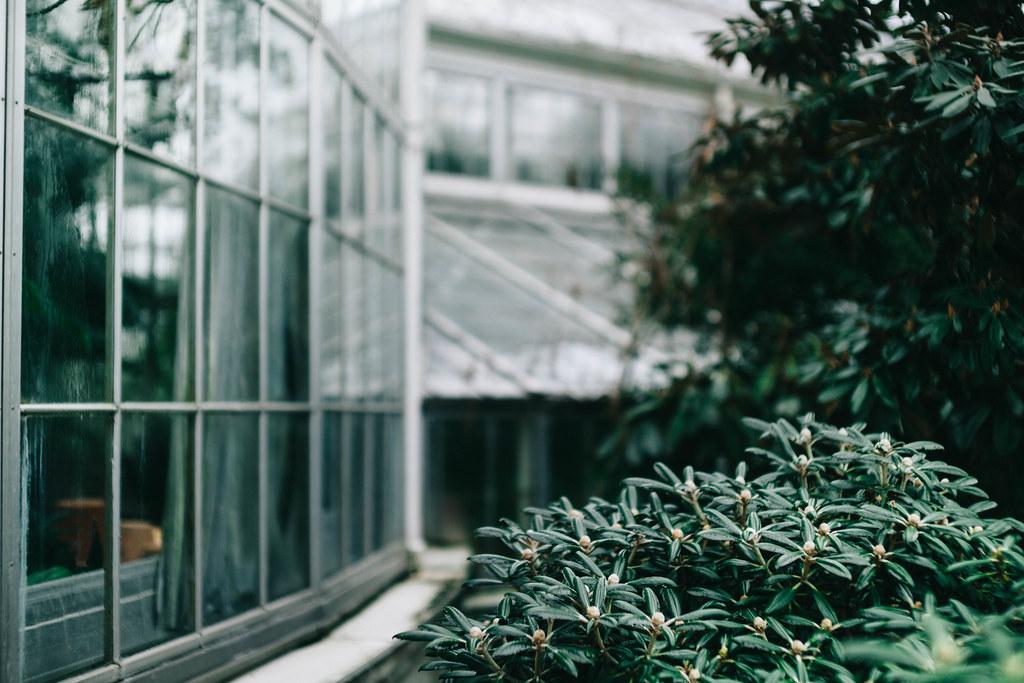 Kasvitieteellinen-puutarha-1