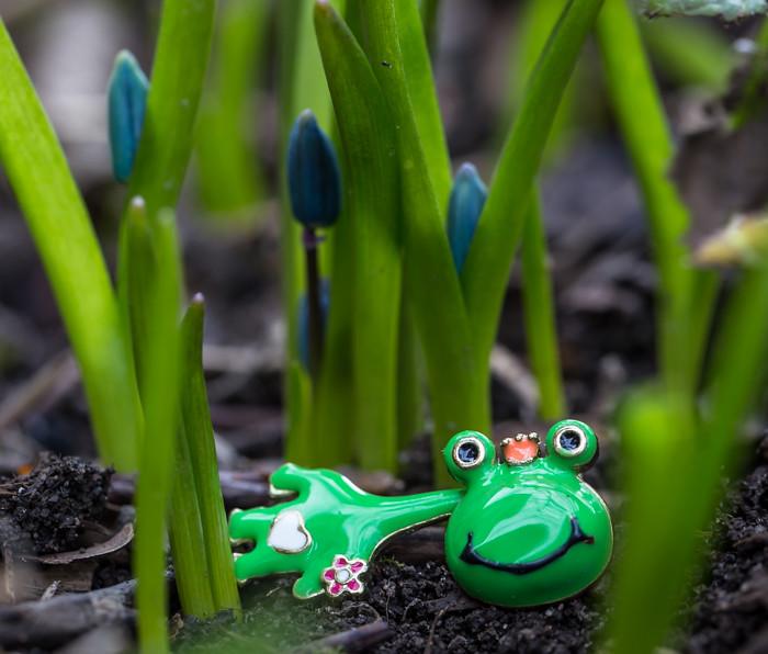vihreä sammakko sininen kukka