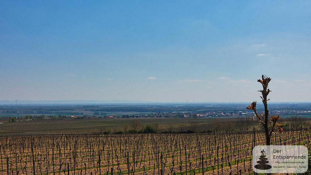 Blick auf Rheinebene und Flörsheim-Dalsheim