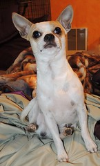 Beaker sitting like a weirdo