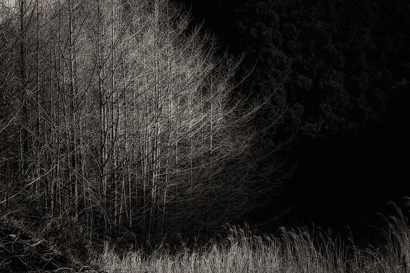 Monochrome Scene