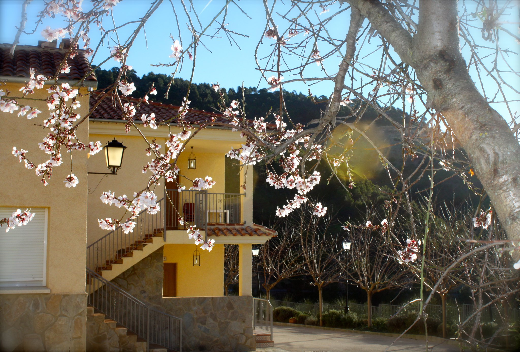 Primavera en VegaSierra - Versión 2