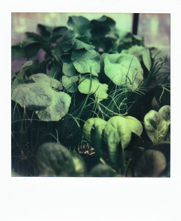 A Study of Plants: Vegetables | by Caleb Jenkins