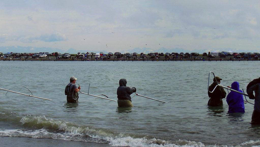 Kenai river dipnetting fishing for Kenai river fishing report