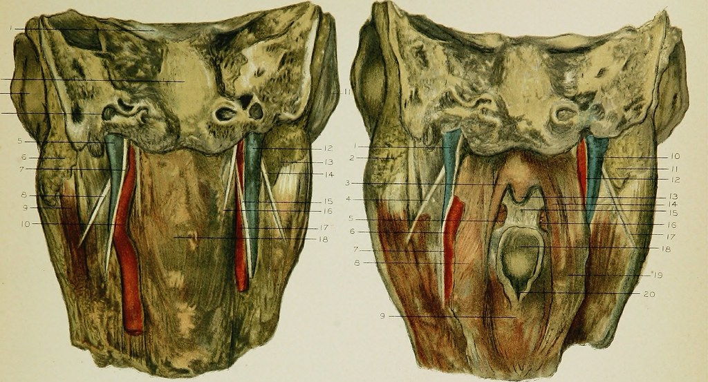 Image From Page 158 Of Regional Anatomy In Its Relation T Flickr