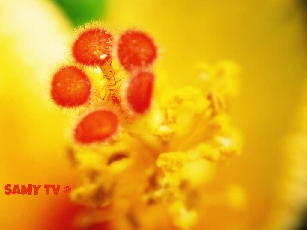 Orange Flower Orange Center Of A Yellow Flower Samytv