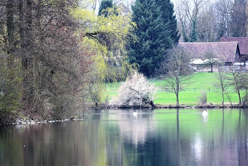 Swans 26.03 (14)