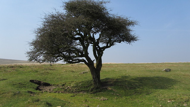 Some shade on Holne Moor