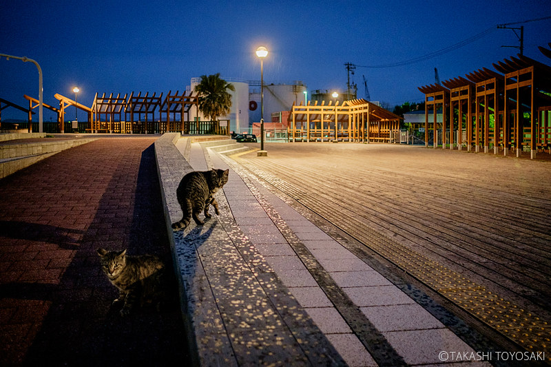 Tokushima Cat Color #256