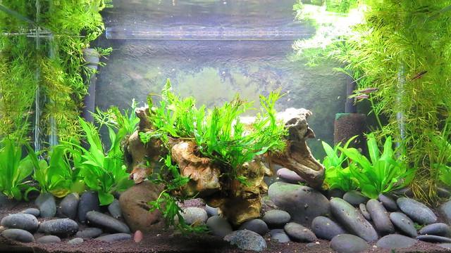 Image Result For Led Planted Aquarium