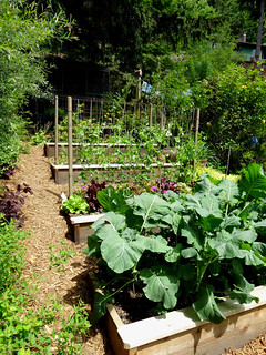 tiered kitchen garden beds in the forest   Backyard ...