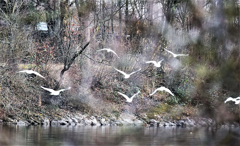 Gulls 26.02 (13)