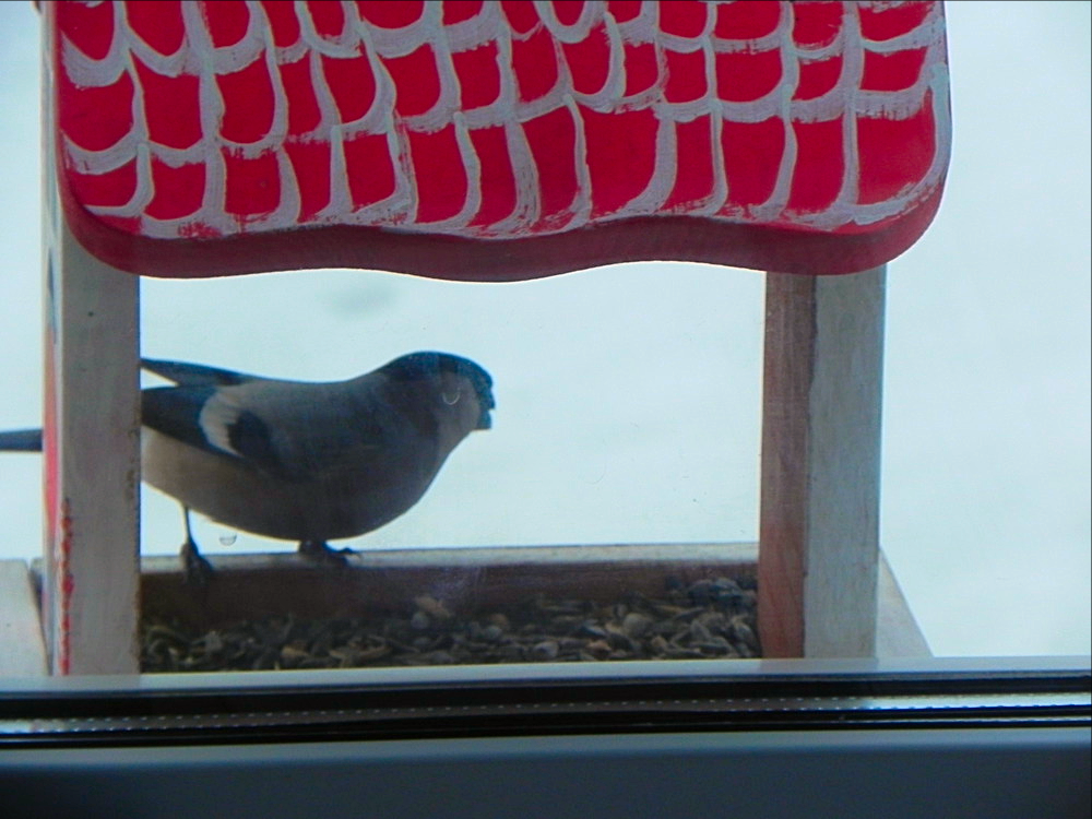 птички Татарстана